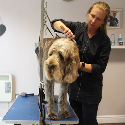 hand stripping dog grooming