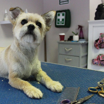 Dog grooming taster day